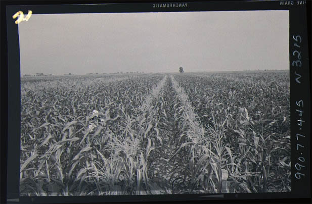 Agricultural Crops_Corn_1990.77.445